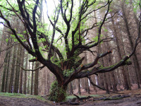 Tree by subflux (CC BY-SA 2.0) https://flic.kr/p/a4KiyM